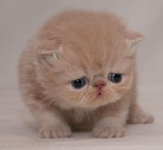 小猫猫 很萌 很可爱
