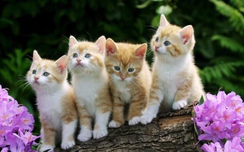 可爱猫咪论坛图片_西安论坛