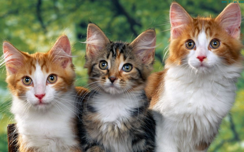 小花猫论坛图片_西安论坛