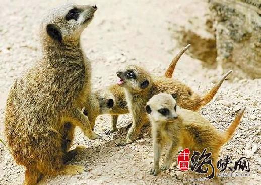 濒临灭绝的动物论坛图片