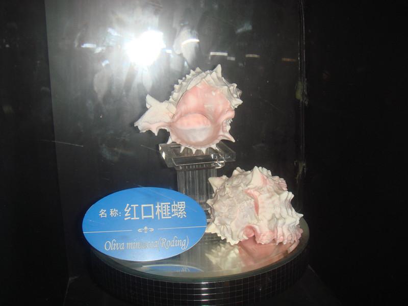贝螺贴画-海洋世界 螺贝厅论坛图片 金寨论坛  <IMG>