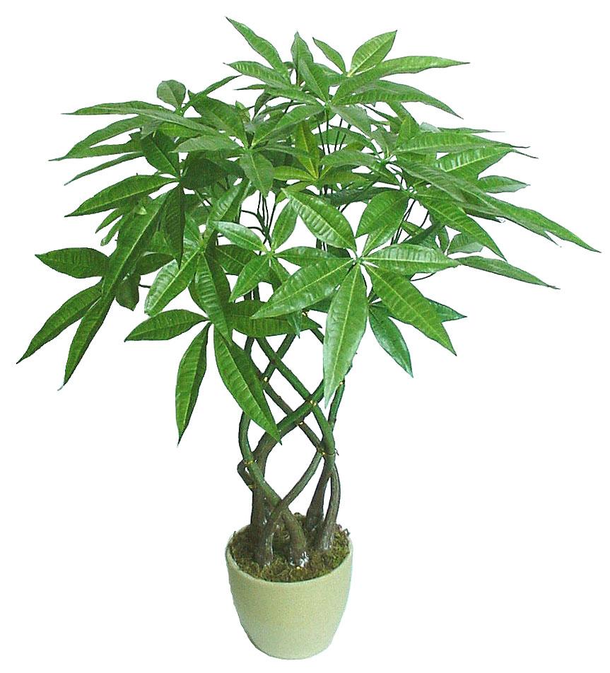 室内植物图片及名称