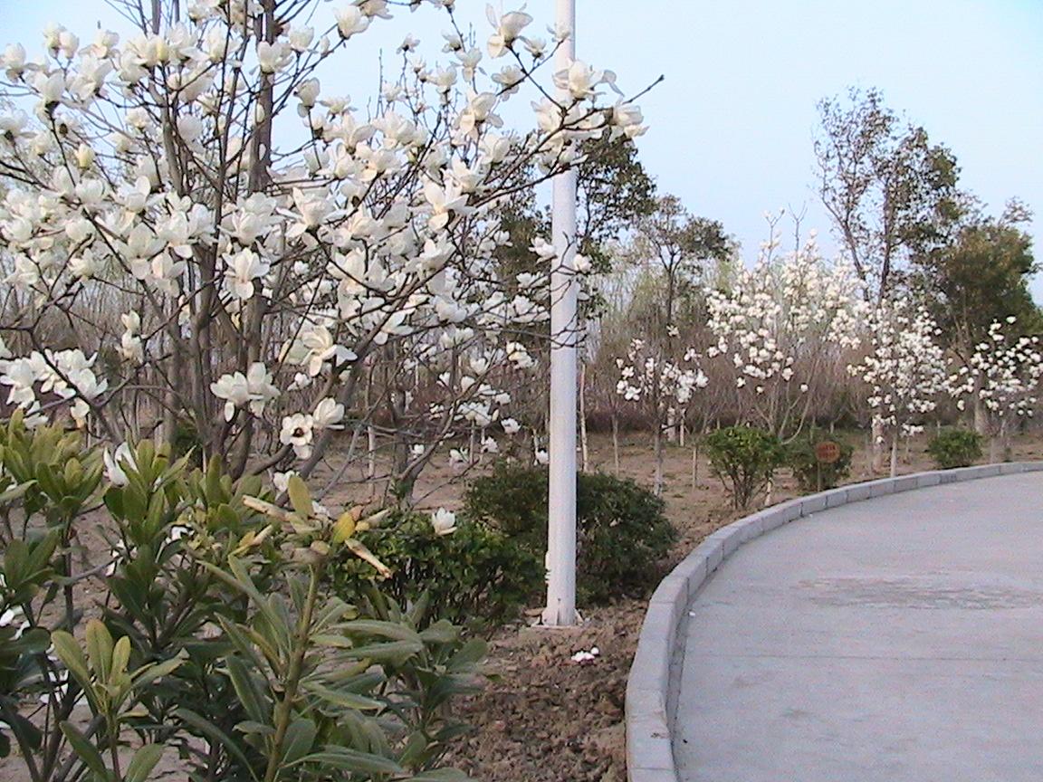 叶县生态园【公园】美景首期上传完毕,欢迎欣赏图片