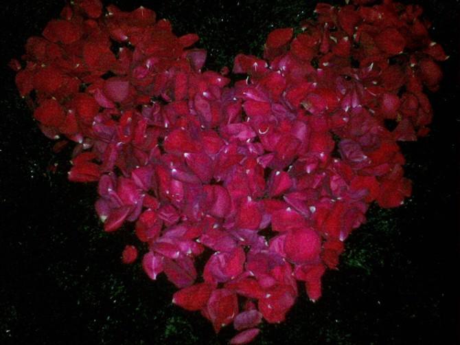 如何折玫瑰花