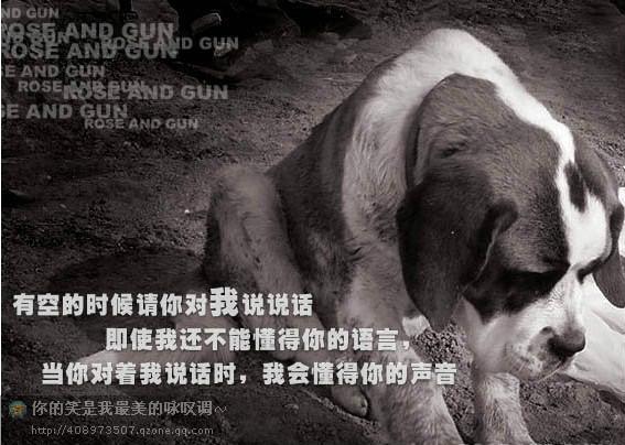 爱护小动物的广告标语