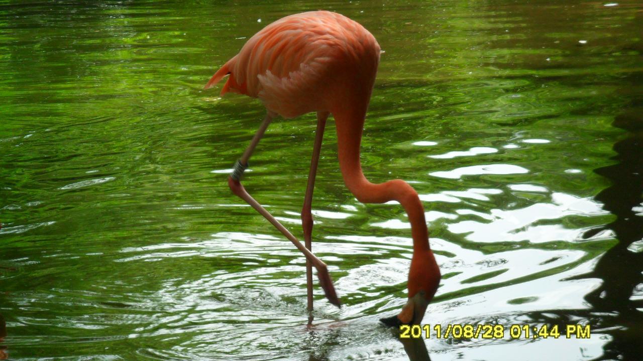 动物园一日游论坛图片