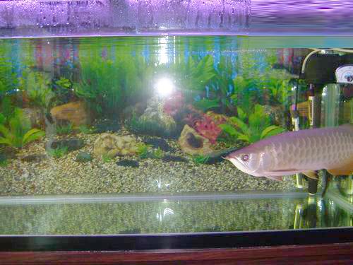 生态鱼缸过滤设计图展示