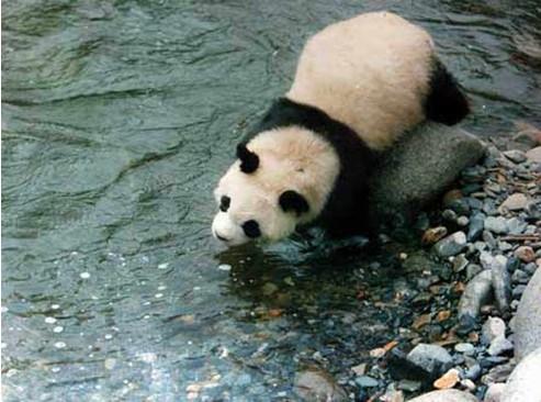 保护区有国家级保护动物18种