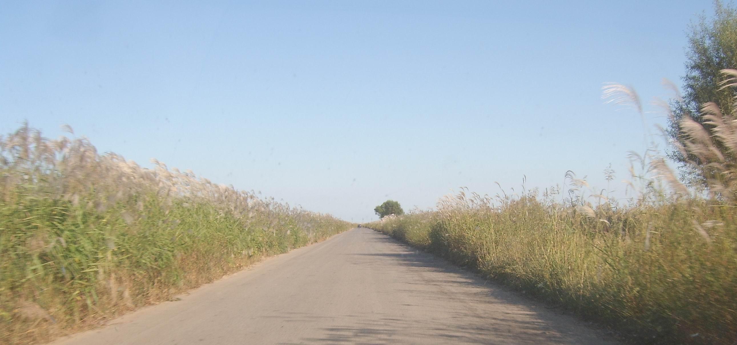 乡间的小路 乡间的小路吧