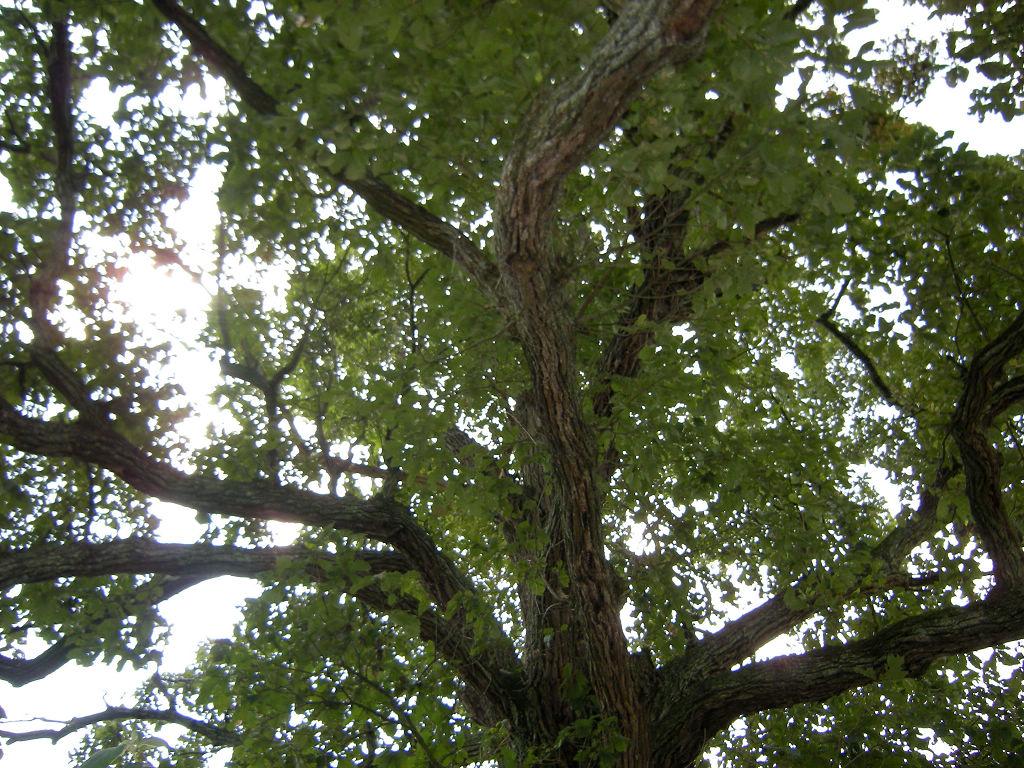 树体结构示意图