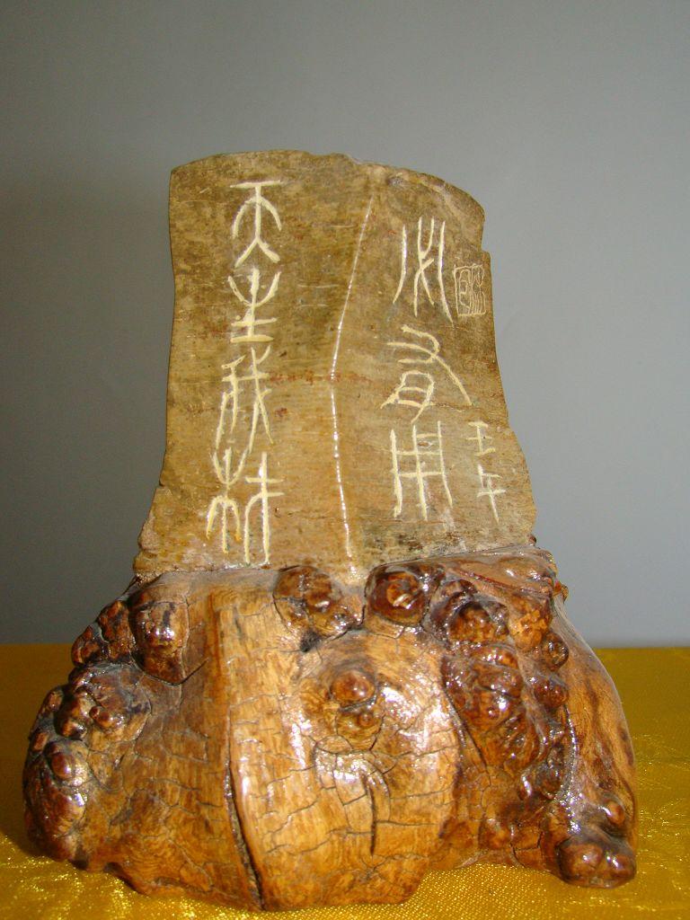 尤其是榆树瘤更是坚硬无比,浑身长满了木刺,花纹特别独特,是制作天然