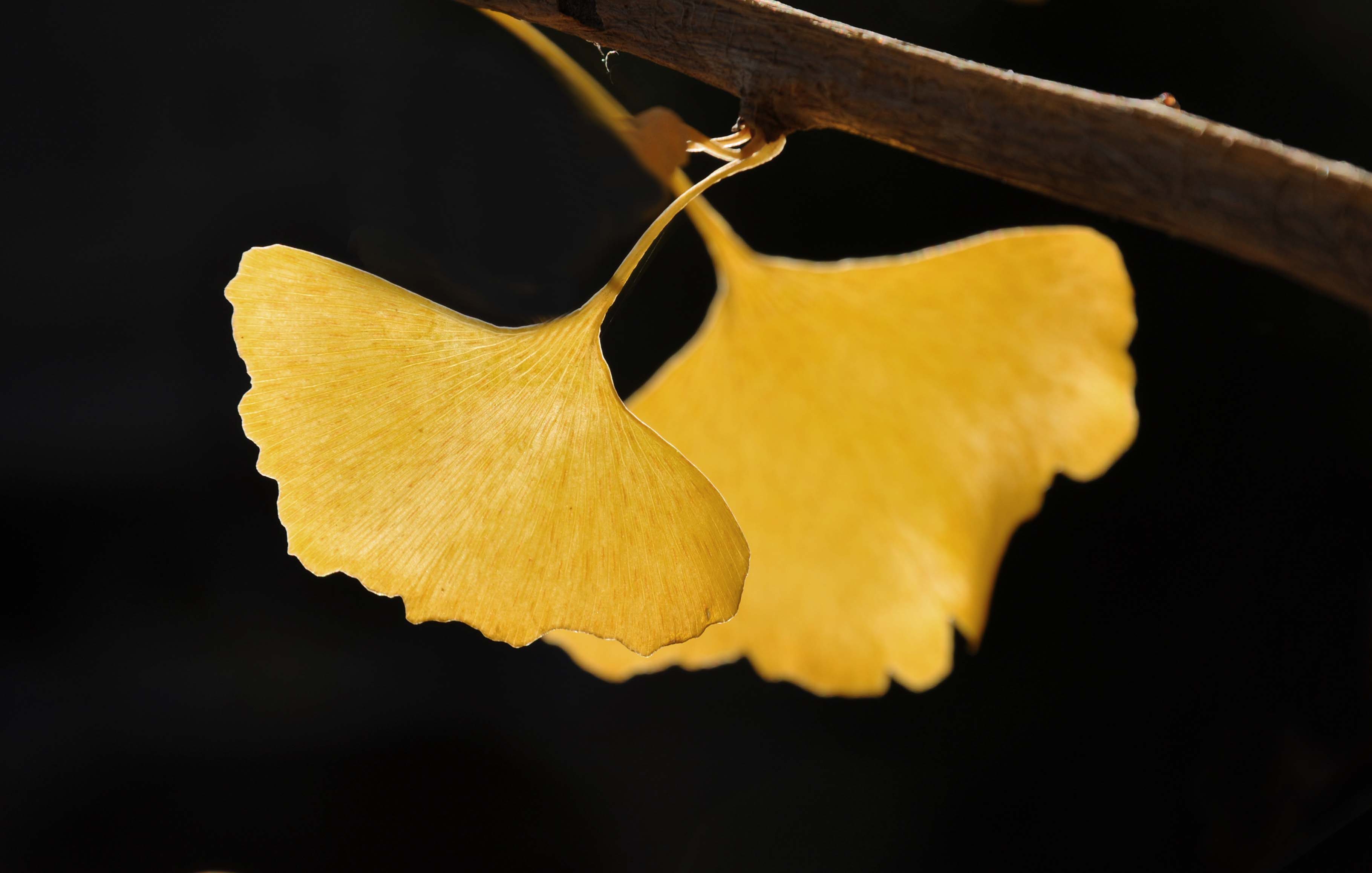 树叶饺子的包法图解