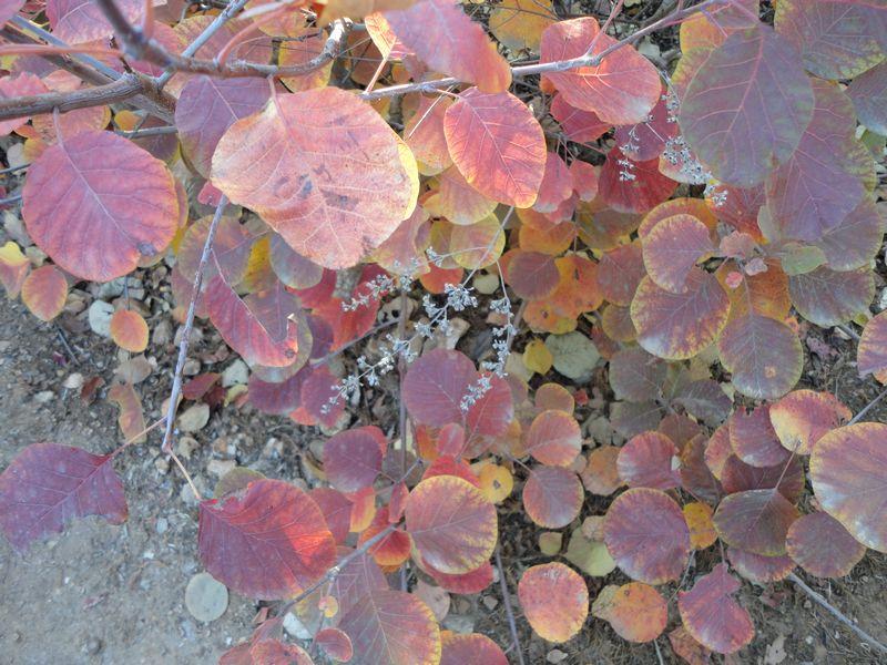 深绿的幕布很快变成了金黄色,这预示着美丽的秋将出场了。幕布缓慢地拉开了,美丽的秋身着金黄色的衣衫,秋用细细的手一指,大地立即变得金黄一片。偶一抬头,看见一棵结实累累的果树,一颗颗硕大的红苹果,沉甸甸的垂吊在枝头。这景色不见得很美,却是一幅秋日风情画。 停车坐爱枫林晚,霜叶红于二月花,使我就会引发出许多联想与感慨。在萧瑟的秋天里,枫叶红的那么动人,不能不使我心驰神往。 我仰望着天空,任凭遐想的自由飞扬。看到簌簌飘洒的落叶,不禁落下泪来,想到万物更替,想到岁月的流逝。感叹人生的悲寥。更能体会到叶落乌啼霜满