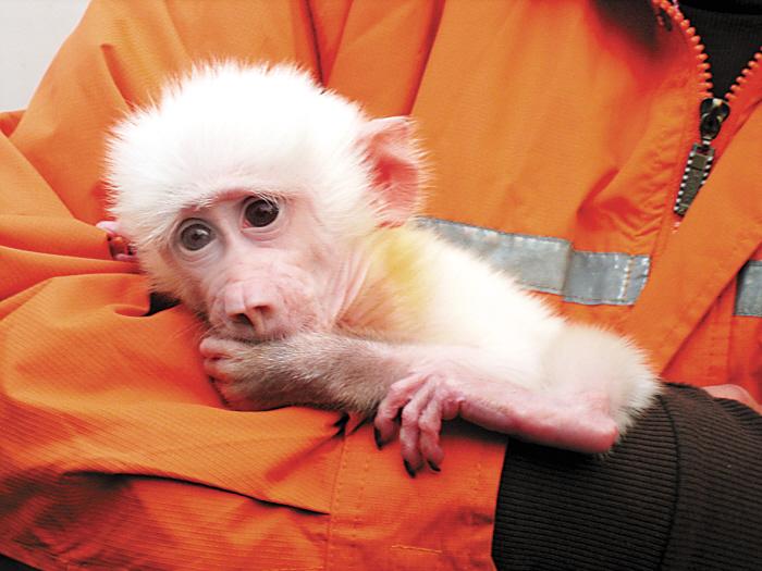 """变异动物品种都很难存活,但动物园方面采取措施对这只""""白色宝贝""""进行"""