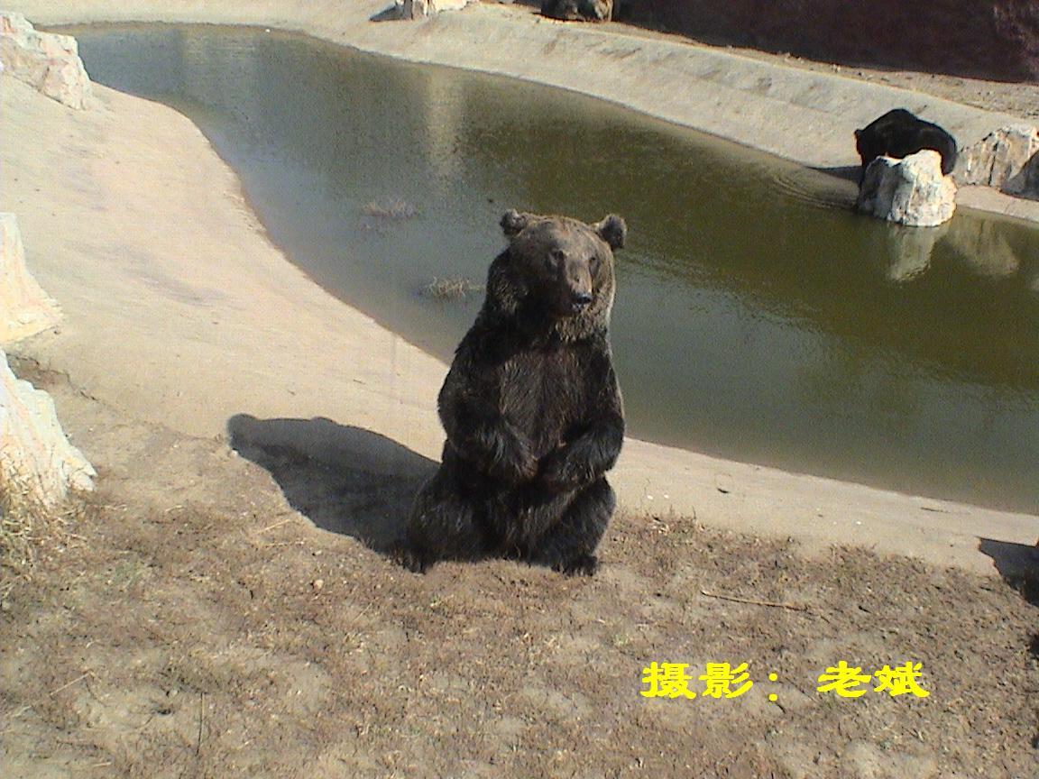 [原创]沈阳棋盘山野生动物园照片