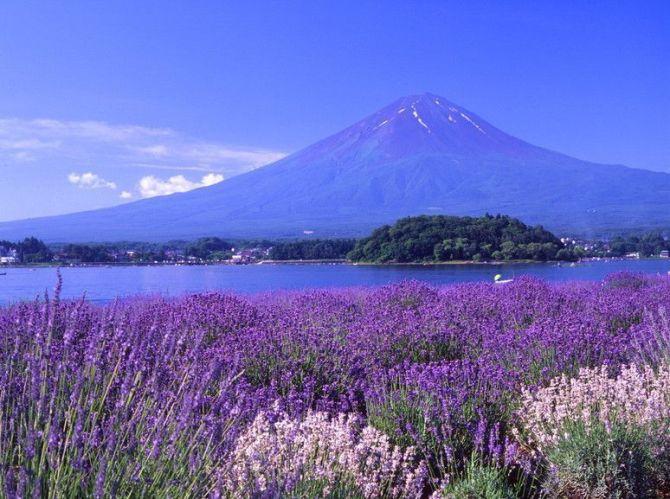 世界上最漂亮的紫色风景图片,熏衣草的花
