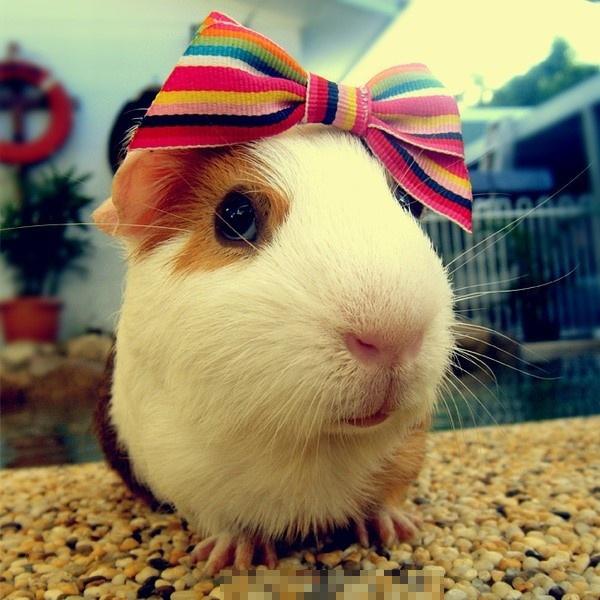 主题: [分享]可爱小动物,经典美图!
