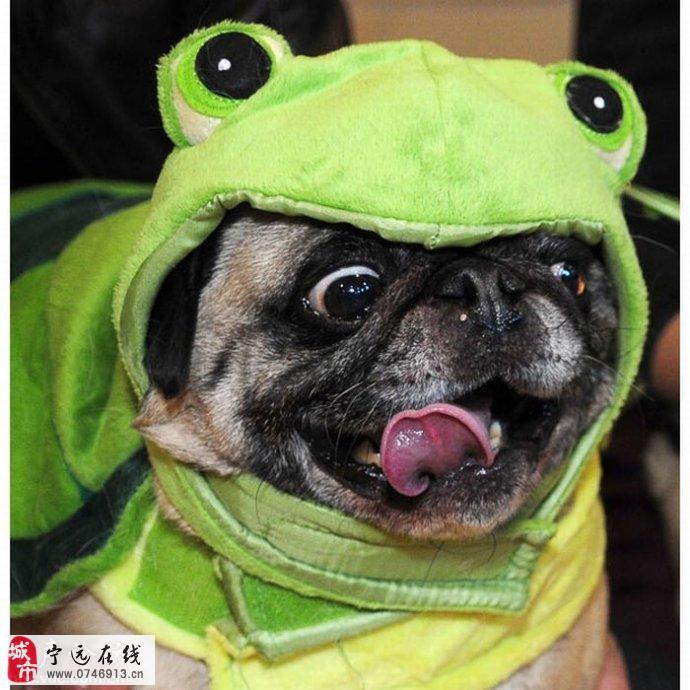2010年度搞笑动物图片:笑破肚皮!