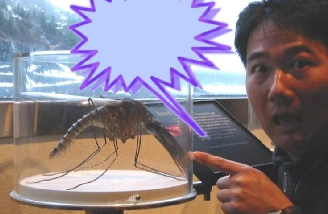 世界最大的蚊子_世界最大的蛇_世界最大的胸_淘宝 ...