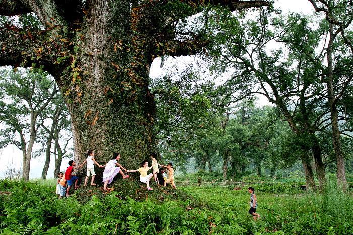 千年古树盆景图集,千年古树,千年风雅12曲谱