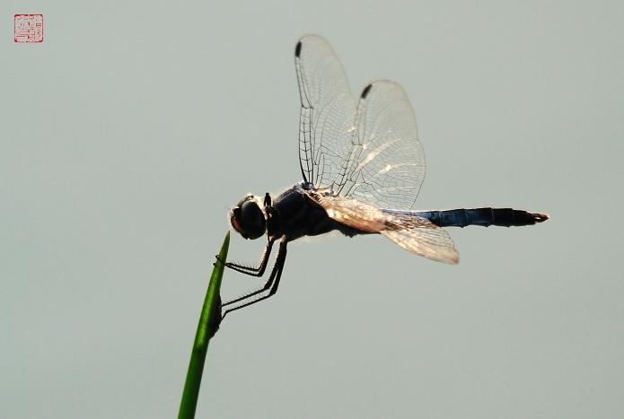 制作蜻蜓步骤图