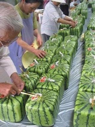你见过正方形的西瓜吗?