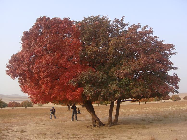 家乡美景五角枫自然保护区生态旅游景区