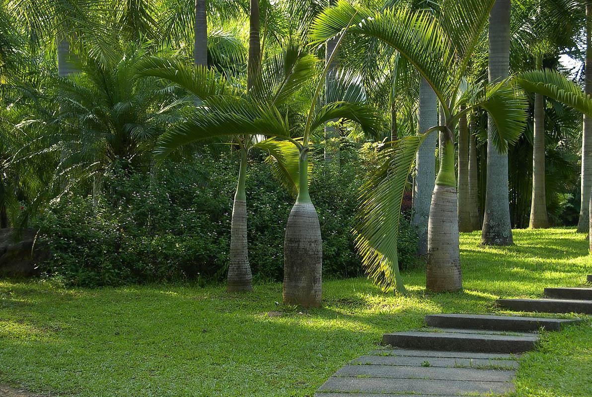 云南之旅散记(三)版纳热带植物园