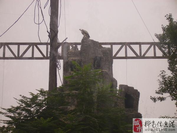 桦南旅友在北京动物园旅游分享【2010年7月】