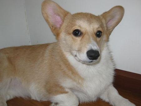 看看狗狗们的微笑; 主题:可爱动物——微笑狗狗; 逗死了!
