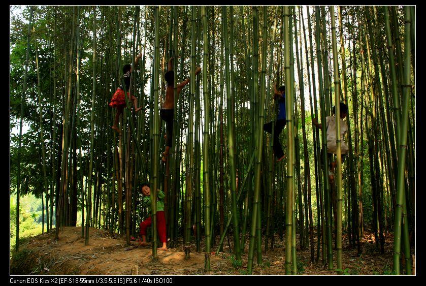 工作证背景底纹素材有关竹子