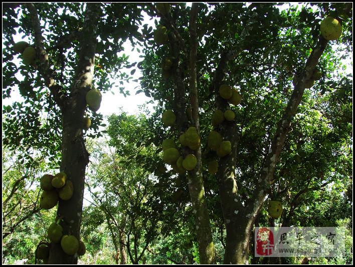 荔枝木大板凳图片
