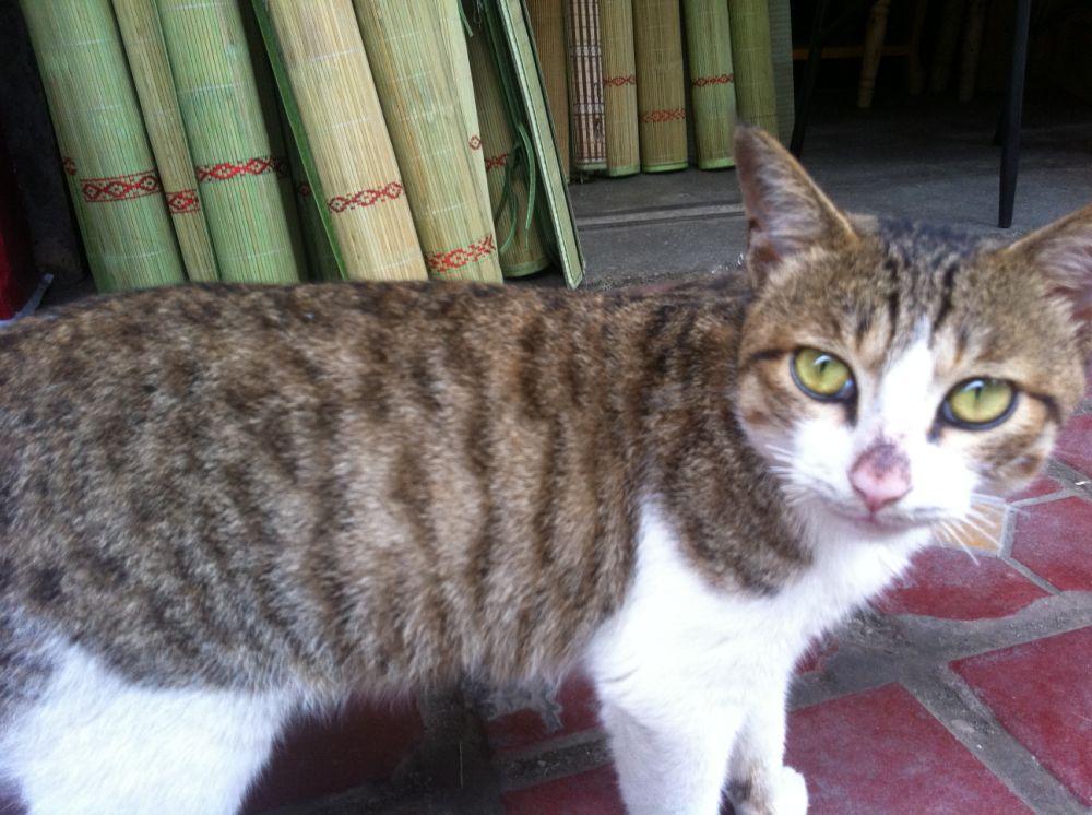 恩恩,签证完毕,那个黑猫猫的鼻子是在是太可爱了, o(∩_∩)o~ 文字
