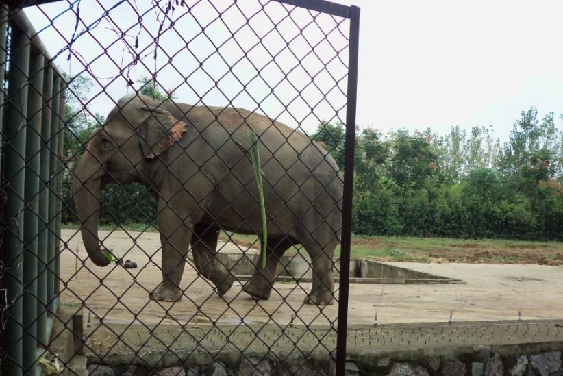 不像其他很多动物园,把狮子老虎们都关在一个一个狭小的笼子里.
