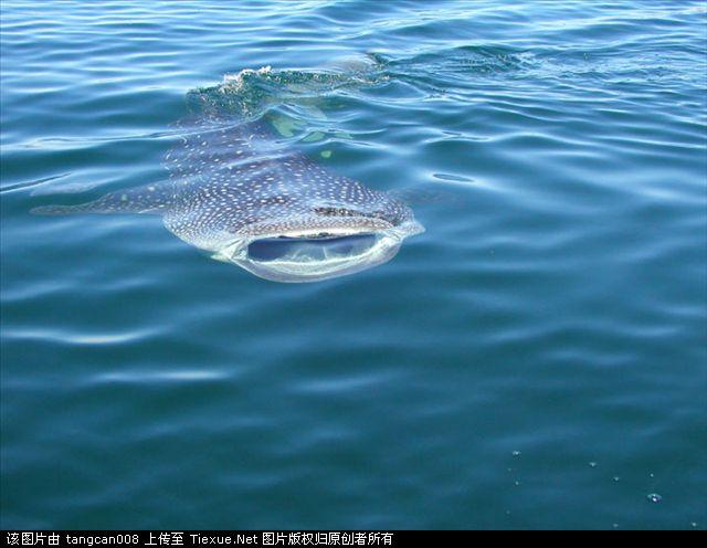 巨型食人鱼图片_水库食人鱼图片图片展示_水库食人鱼图片相关图片下载