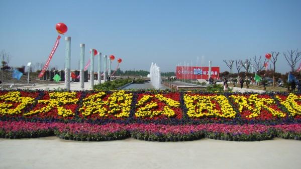阜宁白天鹅公园