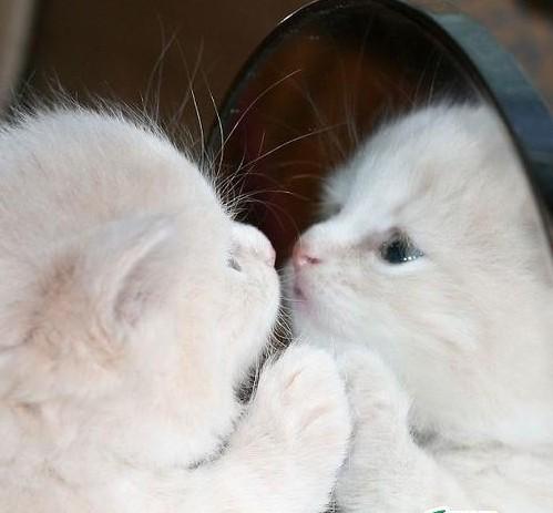 无敌可爱超萌的小猫猫.喜欢猫的朋友们请进