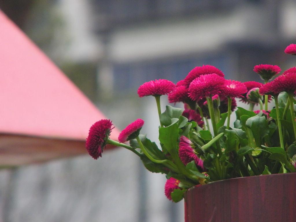 春天里的那些花儿