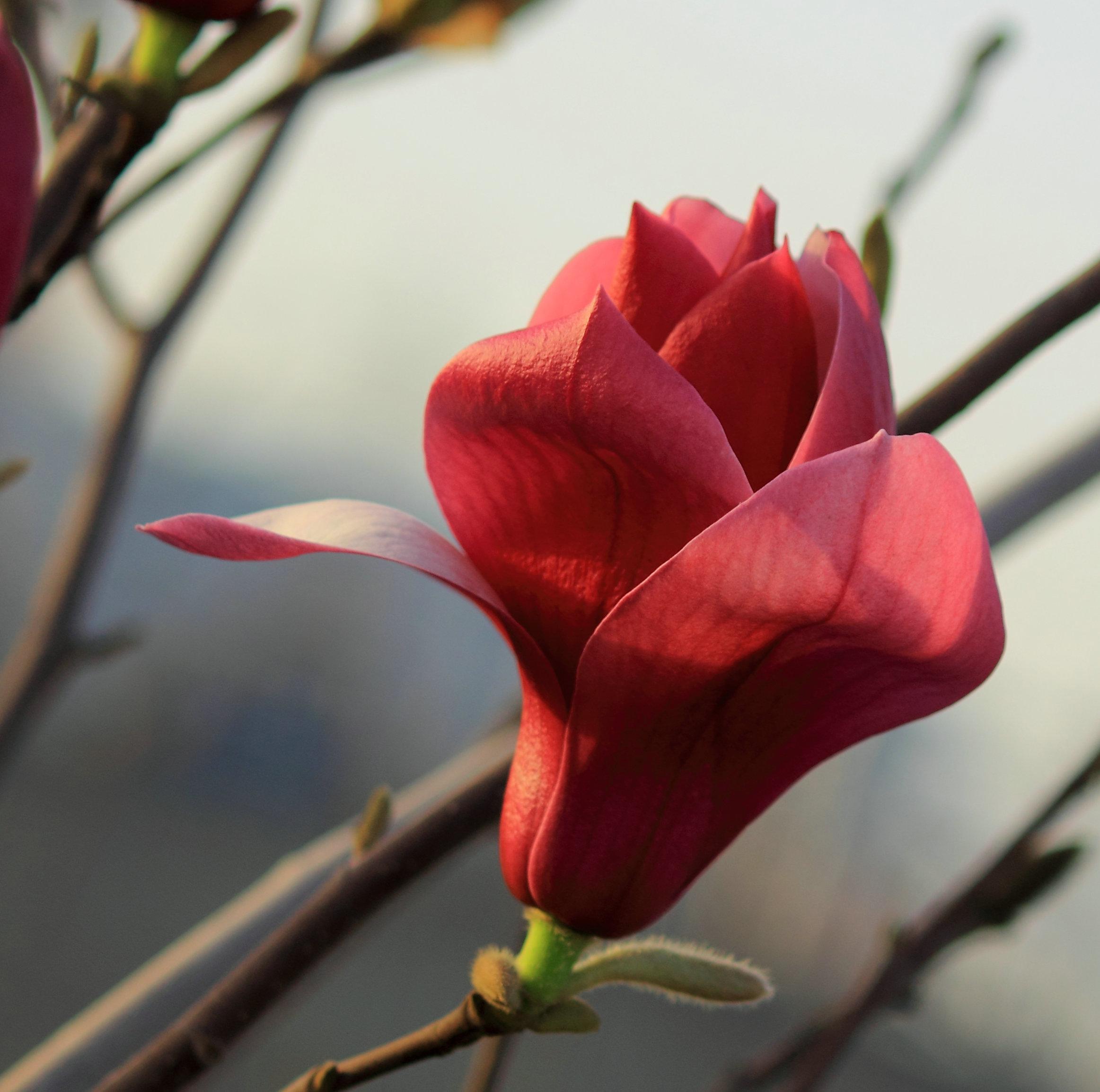 主题 2011草木花卉 即时更新中