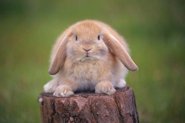 [推荐]可爱的动物们!给大家分享!