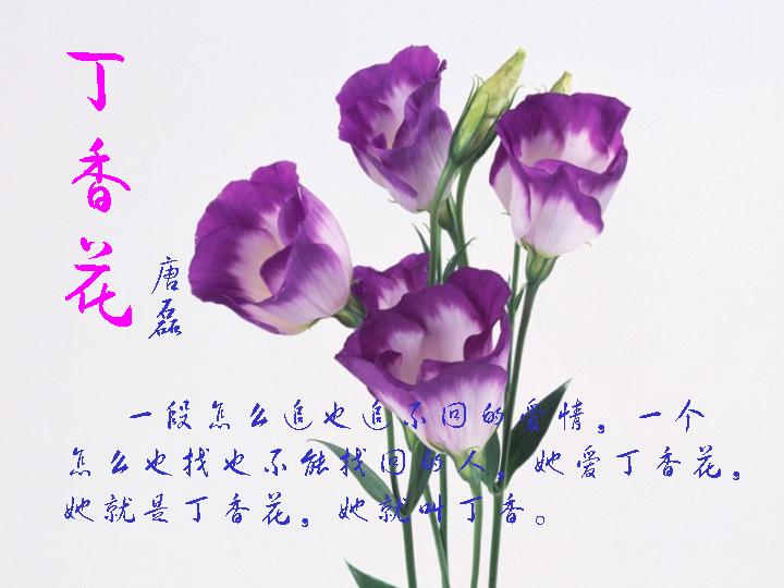 丁香花的故事_利州户外_凌源论坛_凌源在线
