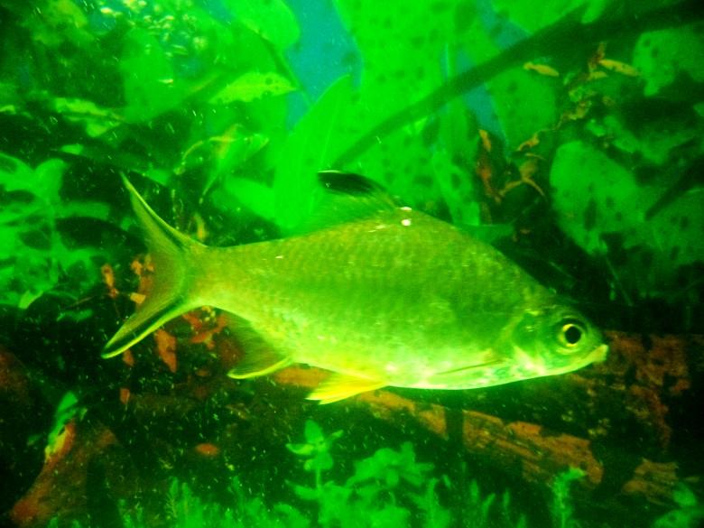 壁纸 动物 水草 水生植物 鱼 鱼类 780_585