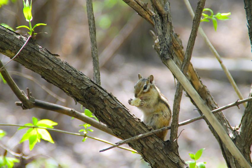 小松鼠上树 影友园地图片