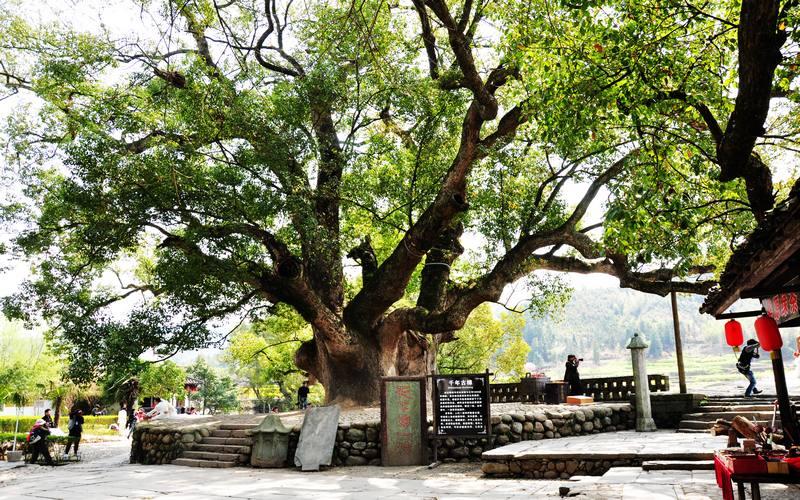 古树广场景观手绘图