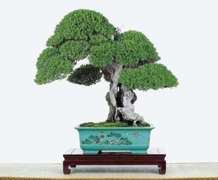 盆景艺术在线交易大厅 盆景艺术交易大厅 视频电影图片原创 搜搜看