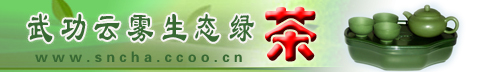 武功县云雾生态绿茶