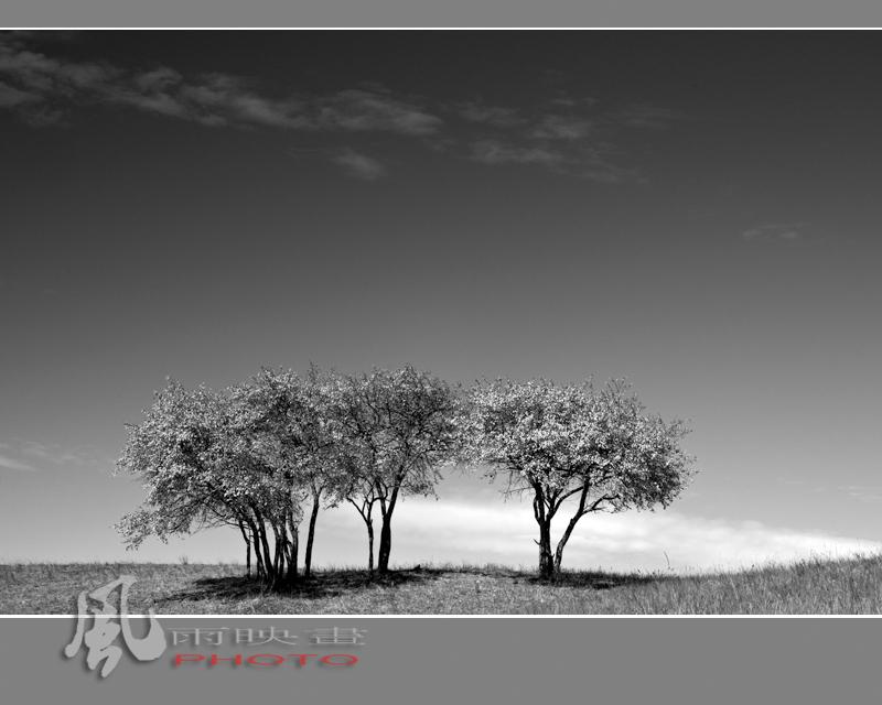 [原创]阳光下的树