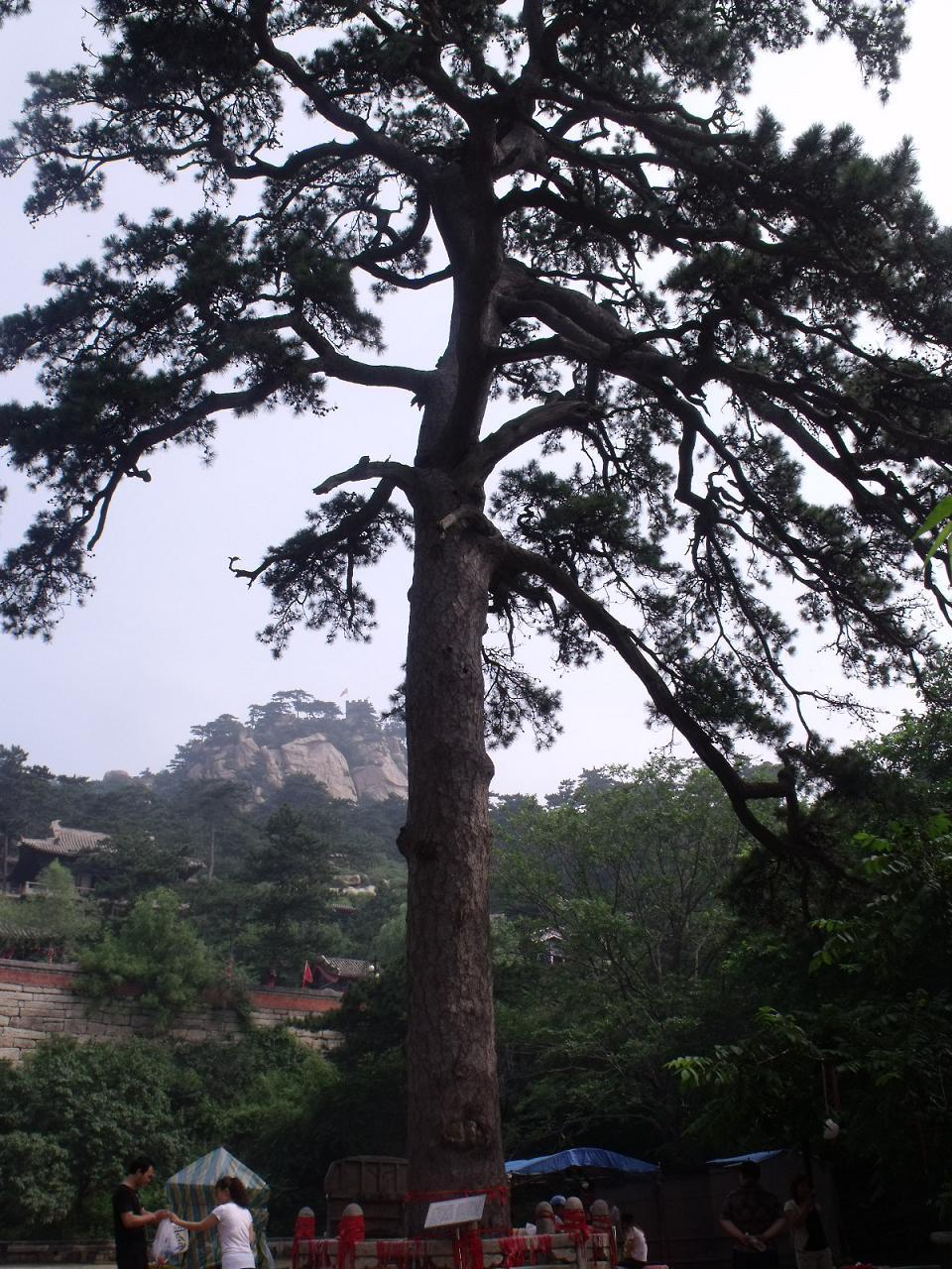 7月8日,骑友老松树和红山二人开始了北镇闾山