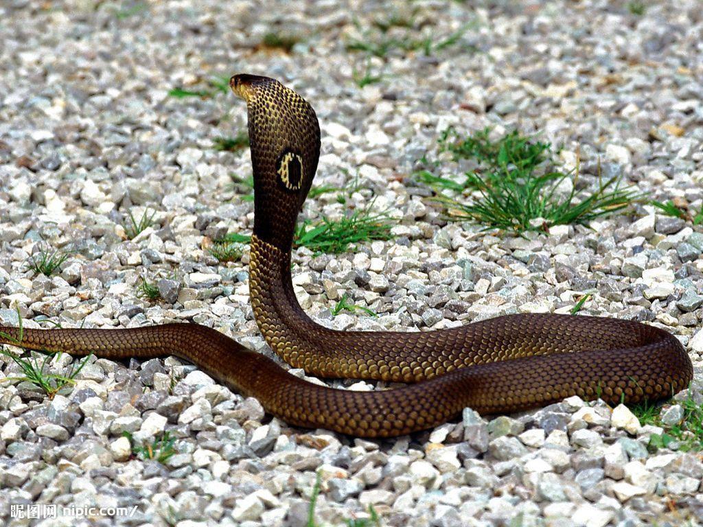 千年难见的七头蛇 95年挖出千年白蛇 村民挖出千年怪物