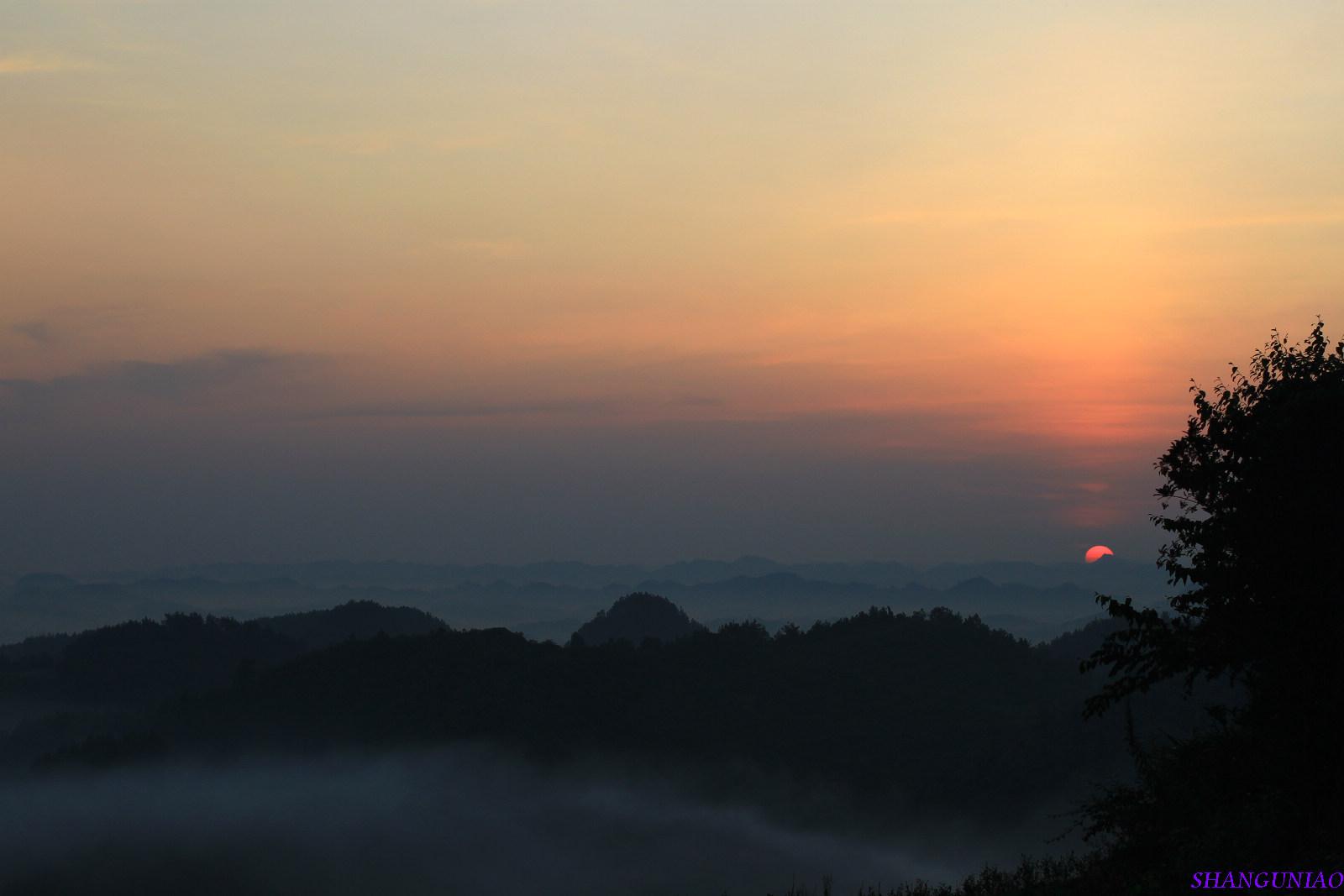 晨雾鸟风景图片